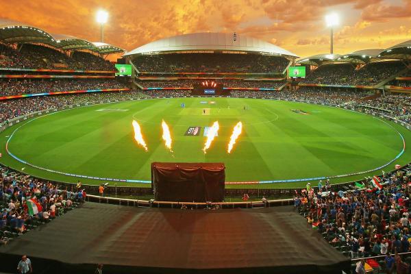 Cricket_50